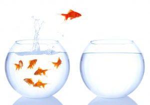 change-fish-1